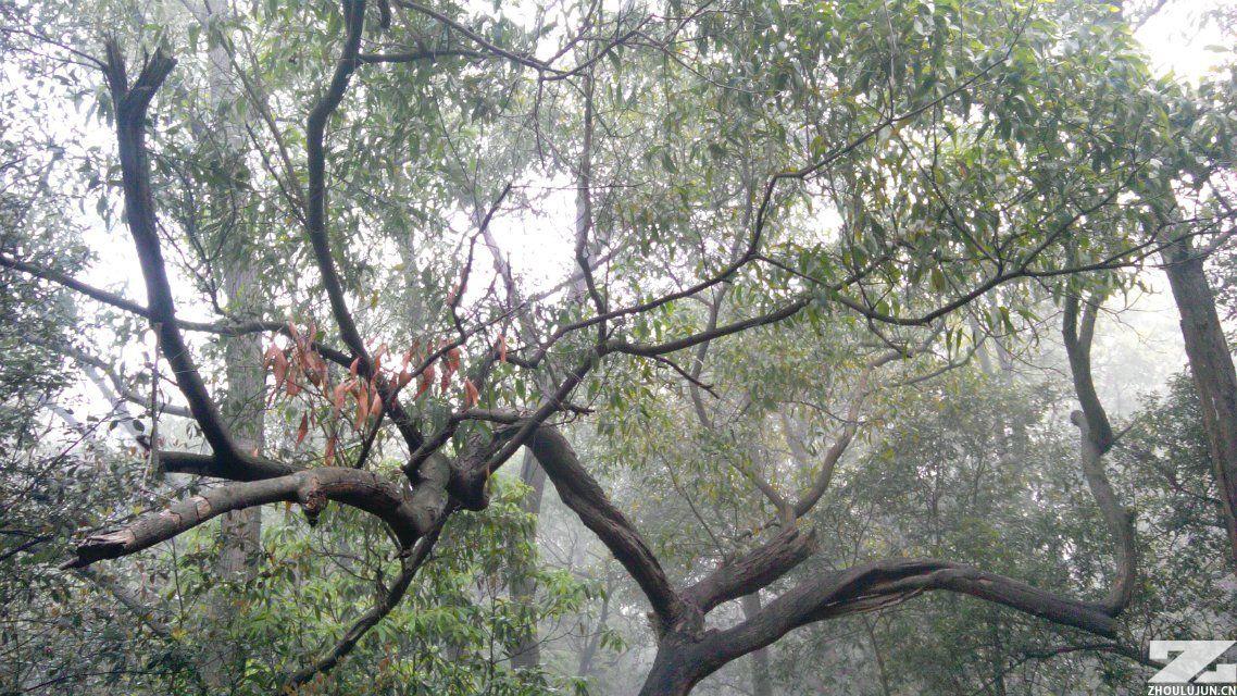 弯曲的树木