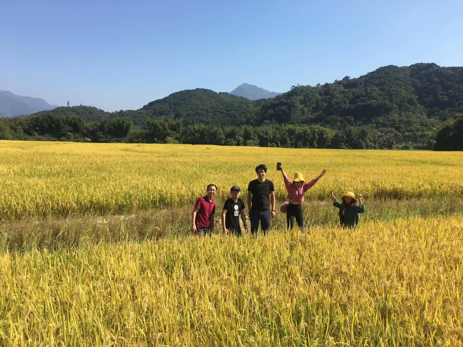 平安大厦 在农村 周陆军 稻田